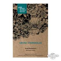 Sanicula hembra (Astrantia major) #1