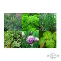 Classical Culinary Herbs (Organic) - Seed kit gift box #5