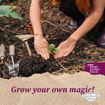 Beach Herbs - Seed kit gift box #6