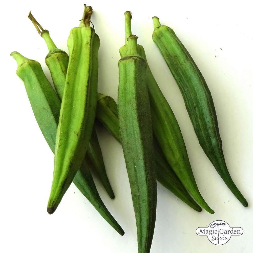 Okra Quiabo Combo Seeds Abelmoschus Esculentus 120 Graines