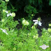 Wildflower Mixture (10g suitable for approx. 5m² area) organic #8