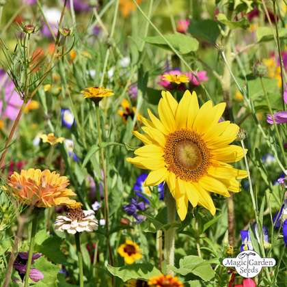 Insect-friendly Flower Mixture conventional - bulk quantity (100g suitable for approx. 50 m² area)