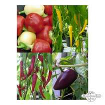 'Mixed colour ground chilli powder' seed kit #2